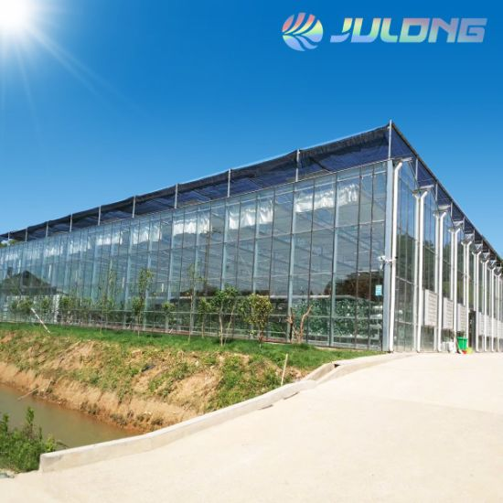 Venlo Type Glass Greenhouse with Galvanized Steel Table Structure Hydroponic Growing System for Sightseeing Strawberry Tomato Cucumber Agricultural Product