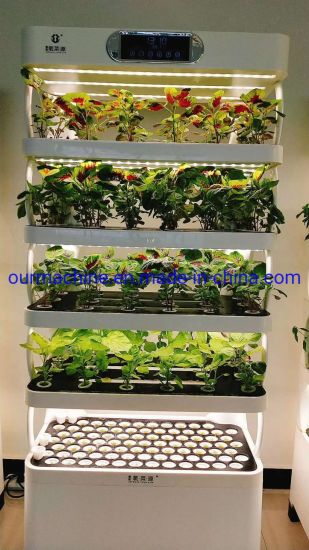 Indoor Garden Growing Plants Hydroponically at Home with LED Lights