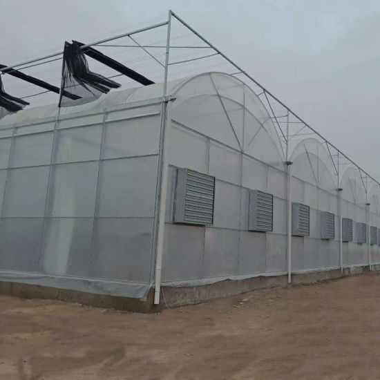 Agriculture Multi-Span Plastic Film Greenhouse for Vegetable