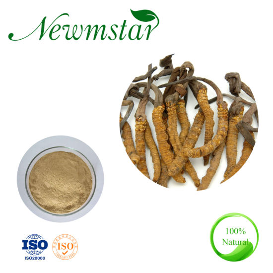 Chinese Medicine Cordyceps Sinensis Extract for Anti Cancer pictures & photos