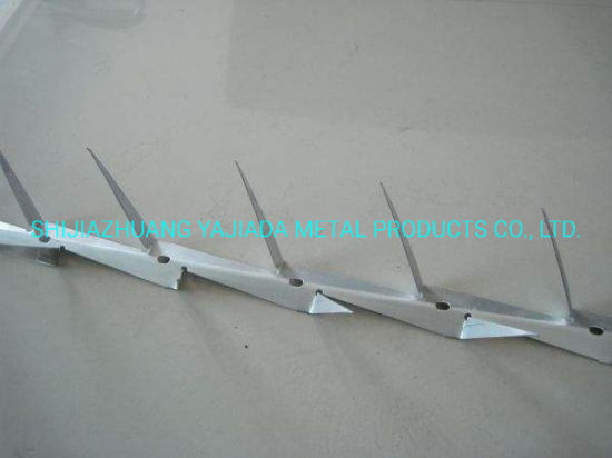 Hot DIP Galvanized Barbed Nails on The Wall (factory)
