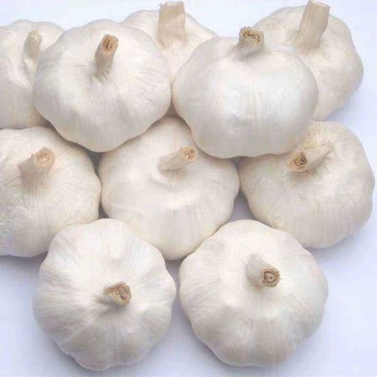 Fresh White Garlic/Pure White Garlic/White Garlic with SGS Certificate
