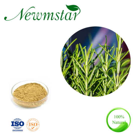 Natural Dried Rosemary Extract Powder Carnosic Acid for Regulating Fat