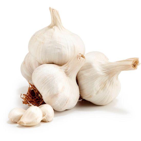 Plant Extract, 1% Allicin Garlic Extract