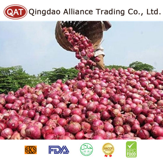 New Crop Chinese Fresh Red Onion pictures & photos