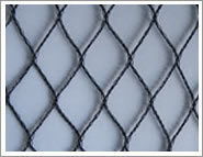 Knotted or Knotless Anti Bird Net for Grape pictures & photos