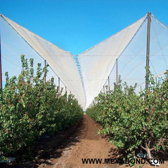Plastic Anti Hail Net, Hail Guard Net, Hail Proof Netting pictures & photos
