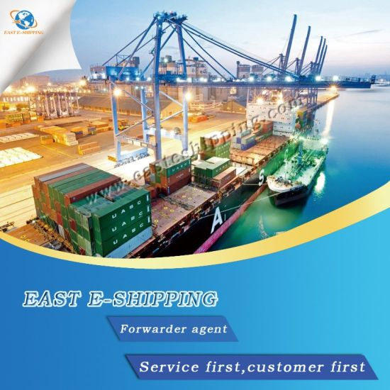 Professional Best Ocean Freight Forwarder Shipping to Morocco