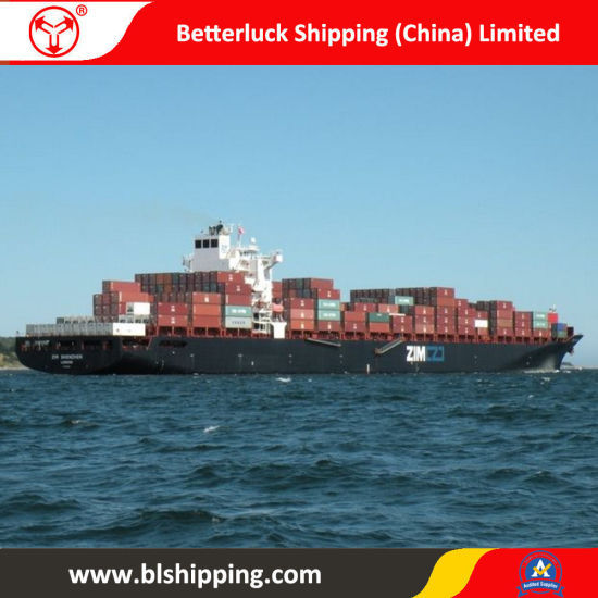 Sea Freight From China to Elizabeth/New Jersey Shipping Forwarder