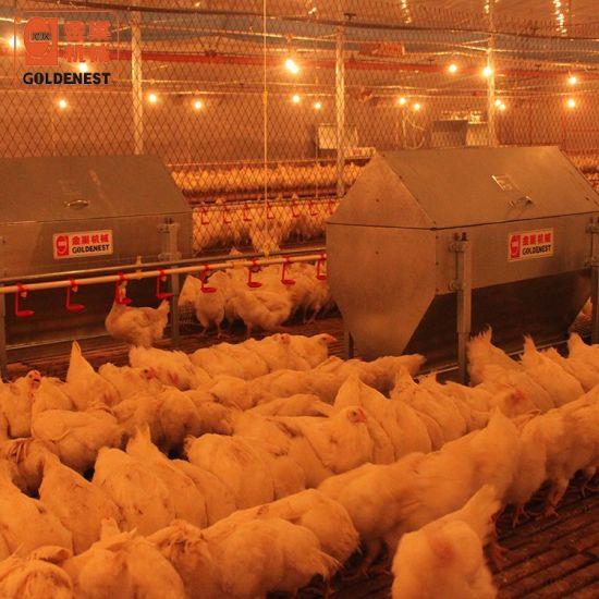 Goldenest Complete Set Poultry Equipment for Breeding Hens/Breeder