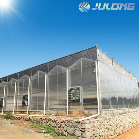 Venlo Hollow Polycarbonate Sheet Green House for Commercial Vegetables Flower Fruits Farm Agricultural Turnkey Project Completely Solution