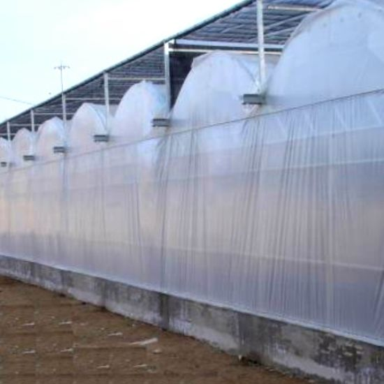 Multispan Plastic Film Greenhouse for Tomato Cucumber Vegetable Growing pictures & photos