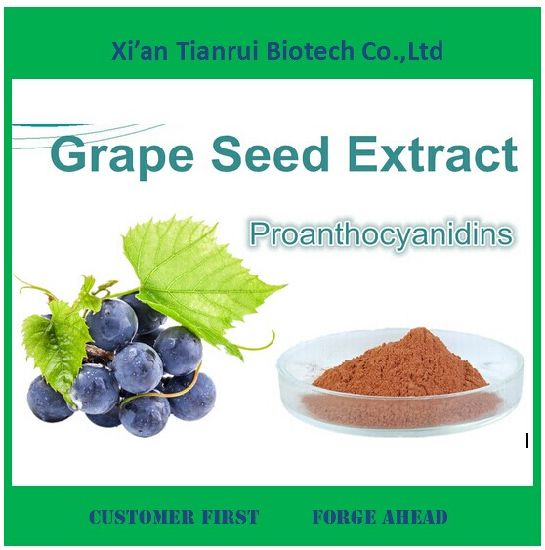 High Quality Grape Seed Extract Powder 95%OPC for Sale