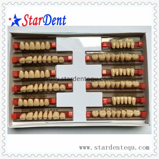 Three-Layer Synthetic Resin Teeth with Ce pictures & photos