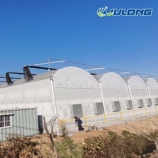 High Quality Plastic Film Greenhouse with Cooling System for Tomato/Tomato/Lettuce/Pepper Planting