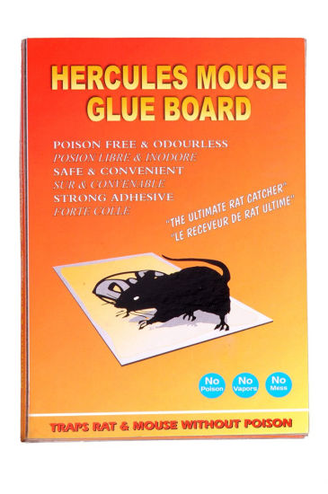 Good Quality Mouse Glue Trap pictures & photos
