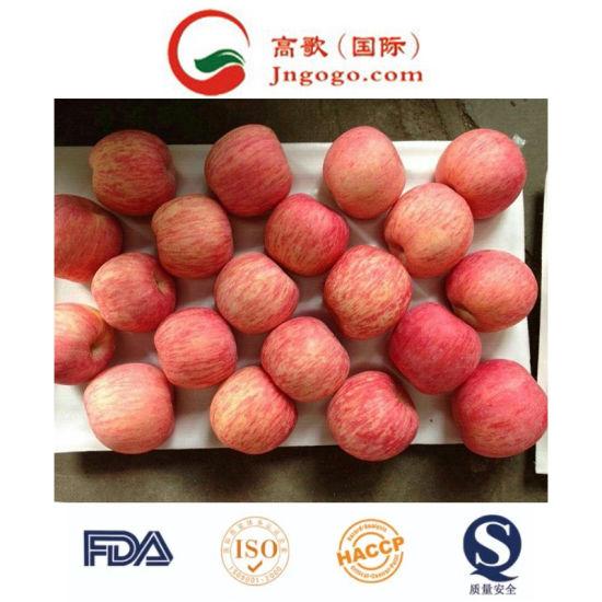 New Crop Fresh FUJI Apple (150-198)