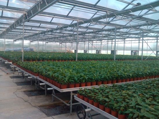 Modern Agricultural Planting Glass Greenhouse with Drip Irrigation System Solar Greenhouse