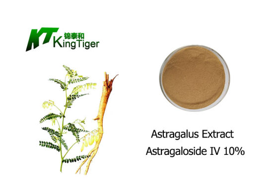 High Quality Astragalus Root Extract 10% Astragaloside IV Meets The European Standard