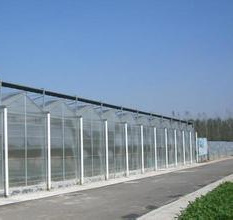 Vegetables/Garden/Flowers/Farm Multi Span PC Sheet Greenhouse