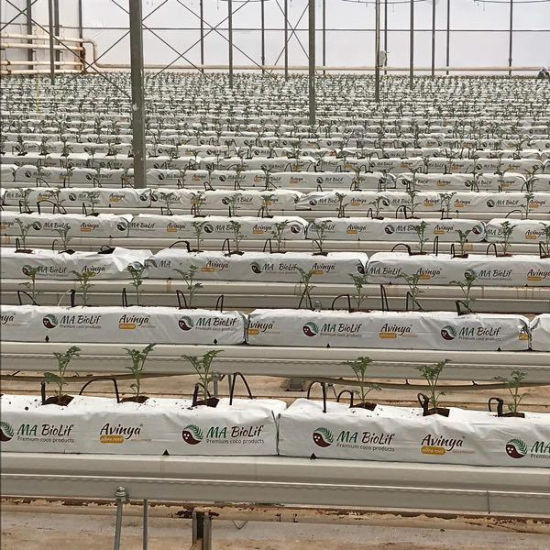 Xinhe Cucumber / Tomato / Strawberry Growing System