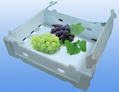 Plastic Corrugated PP Hollow Sheet Fruit Packing Box