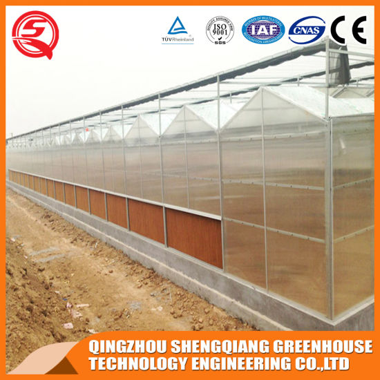 Commercial Stainless Steel/Aluminum Profile PC Sheet Greenhouse for Garden