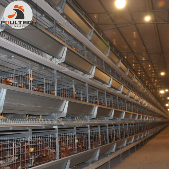 Chicken Farm Raising Equipment H Type Layer Chicken Cage