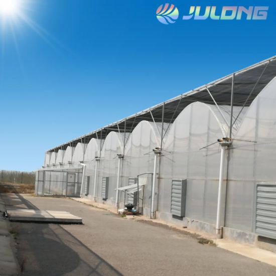 China Aquaponics Supplier F-Clean Multi-Span Film Greenhouse with Cooling Pad Exhaust Fan Greenhouse