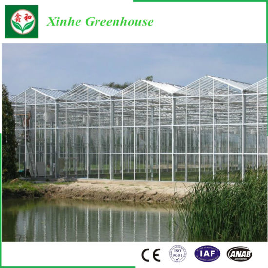 Xinhe Turn Key Greenhouse