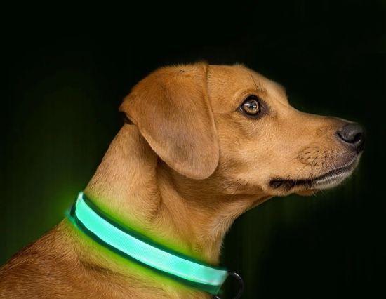 LED Pet Products Dog Cat LED Light Dog Collar