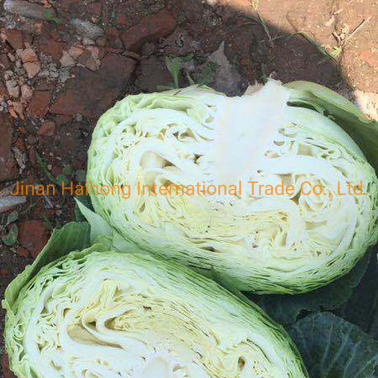 Fresh Green/White Cabbage pictures & photos
