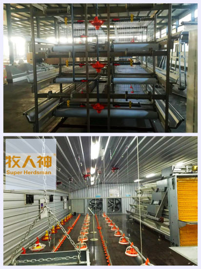 Poultry Farm Equipment with House Construction for One-Stop pictures & photos