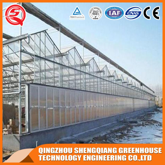 Commercial Multi-Span Garden Toughened Glass Greenhouse/Vegetable pictures & photos