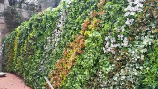 High Quality Artificial Plants and Flowers of Green Wall Gu-Wall05182735 pictures & photos