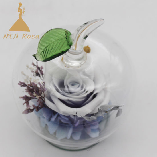 Beautiful Forever Rose in Apple-Shaped Glass for Dorm Decoration pictures & photos