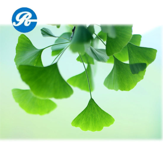 Ginkgo Biloba Extract 100% Through 80mesh Ginkgo Biloba pictures & photos