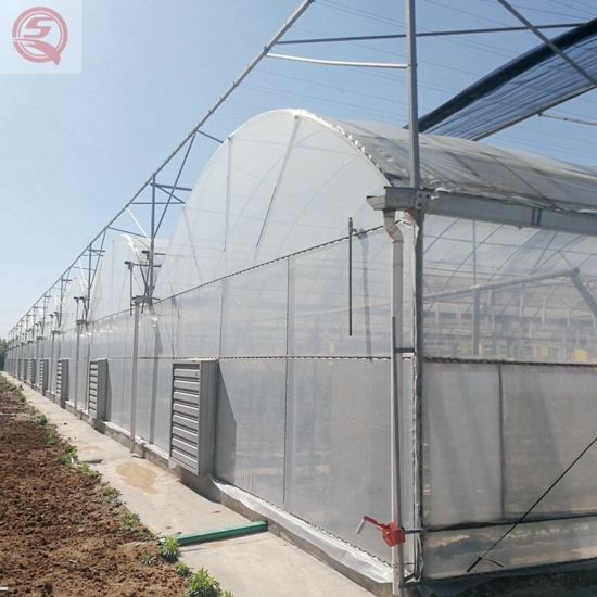 Agricultural Vertical Farming Plastic Film Tomato/Strawberry/Cucumber/Garden Greenhouse Suppliers in China