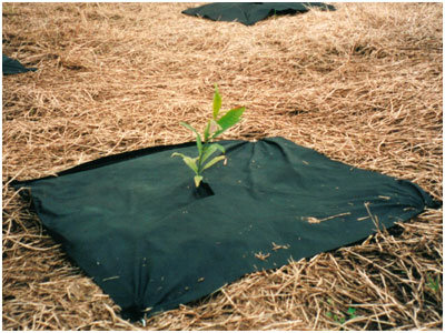 PP Non Woven Fabric Used for Weed Control Fabric pictures & photos