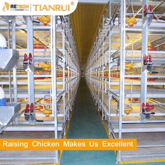 Automatic Chicken Poultry Farm Equipments for Broiler