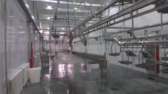 Small Scale Goat Slaughtering Equipment Capra Macellazione Macchina Slaughterhouse Equipment Sheep Manual
