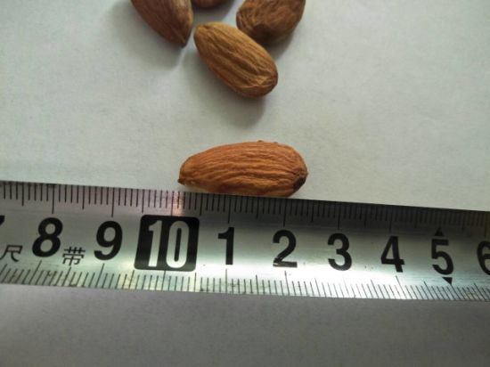 Almond Healthy Snacks Nut Bites Chinese Snacks