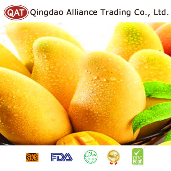Top Quality Fresh Whole Mango pictures & photos