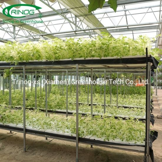 Agricultural used vertical NFT tower hydroponics lettuce for sale