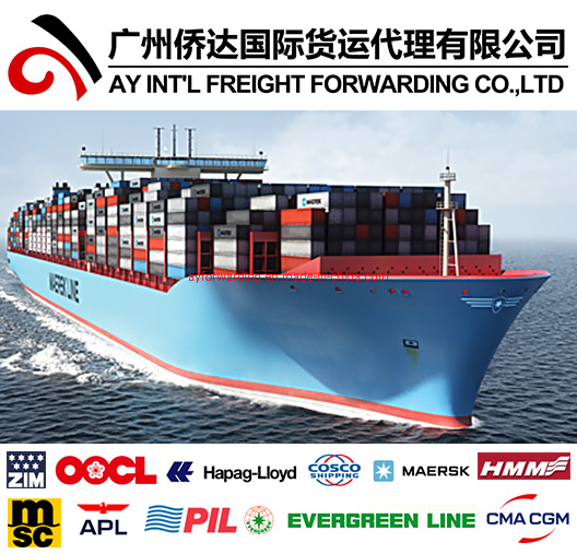 Fast Shipping From China to All Over World pictures & photos