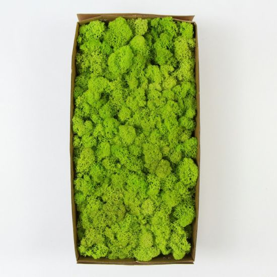 500g Per Box Custom Design Green Indoor Decorative Moss Wall For For Coffee Table
