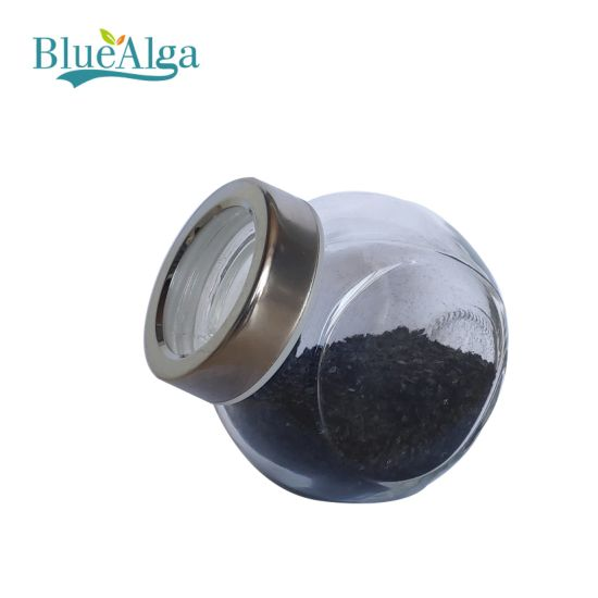 Ascophyllum Seaweed Extract Powder with High Mannitol Organic Fertilizer