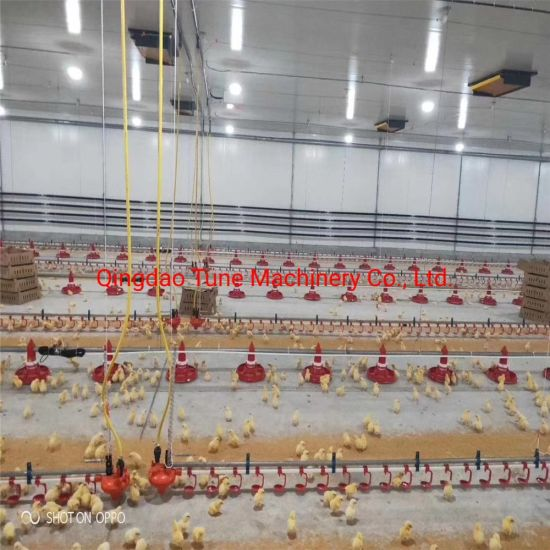 Most Popular Used Poultry Breeding Equipment for Broiler