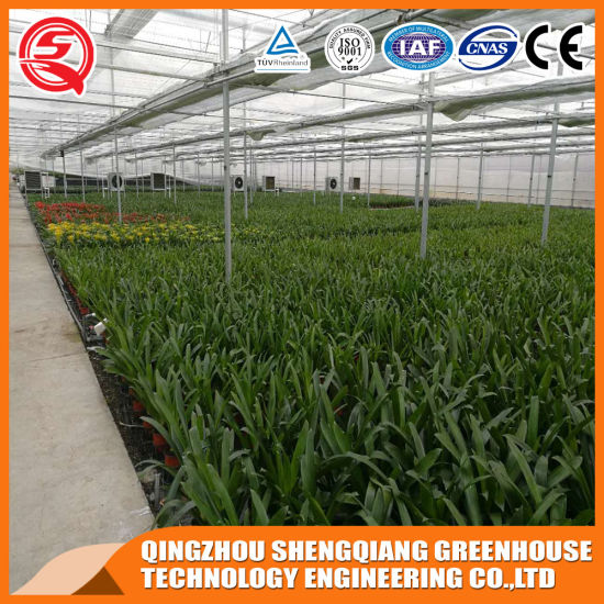 China Prefabricated Venlo Tempered Glass Green House pictures & photos