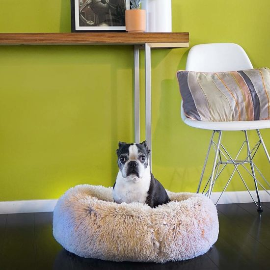 High-Density Mattress Dog Couch Elevated Dog Bed
